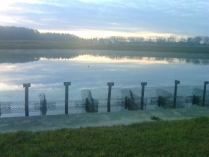 Sunrise at Cordele Hatchery. Catfish were spawned in the pens eight months ago and grown in the ponds until harvested.