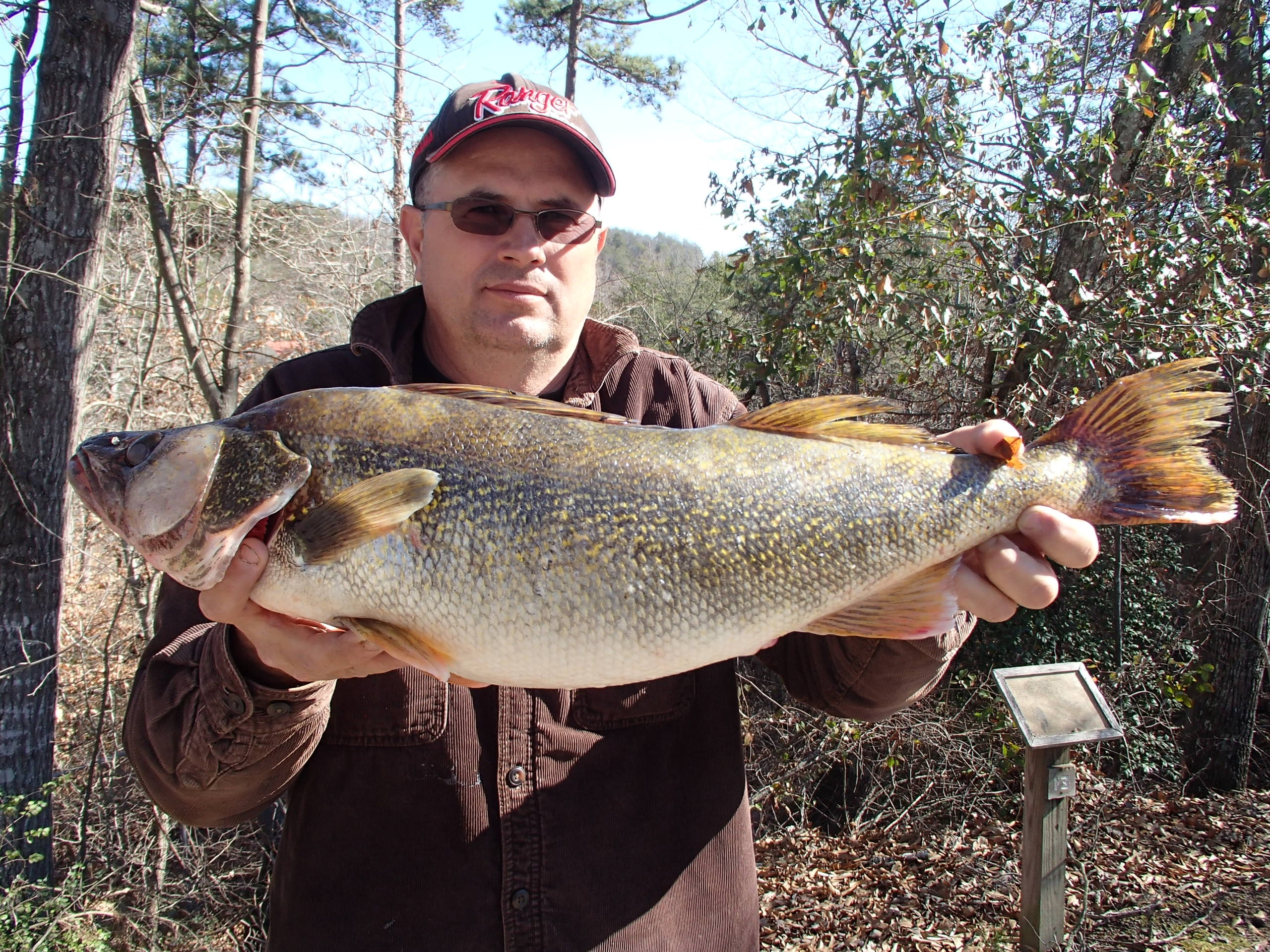 Freshwater fish in georgia - Buddy Wade With His 8 Pound 9 Ounce Lake Lanier Walleye