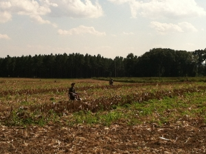 Kids in the field at an adult-child dove quota hunt in Region 6.