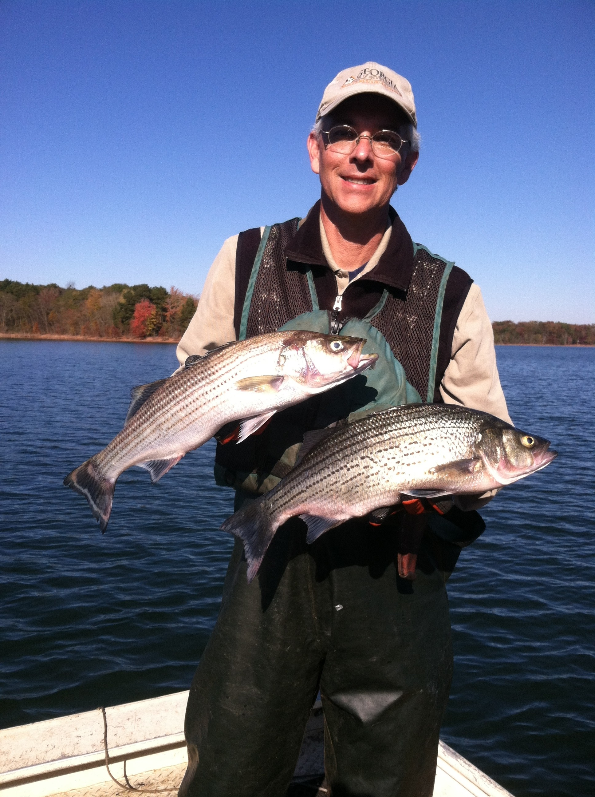 Lake hartwell georgia wildlife resources division for Lake hartwell striper fishing report