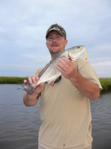 In saltwater, big schools of redfish will be roaming the mud flats all winter. T.J. Swails of Valdosta caught this one on a candy corn Assassin Sea Shad while fishing out of Crooked River.