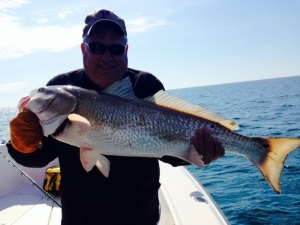 Andy Taylor caught and released this beautiful redfish from a nearshore reef while fishing out of Hickory Bluff Fishing Club.