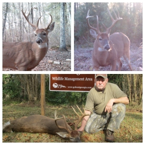 Same deer in 2012 (top left) as seen in 2013 (top right). Was harvested on Ocmulgee WMA in 2013.