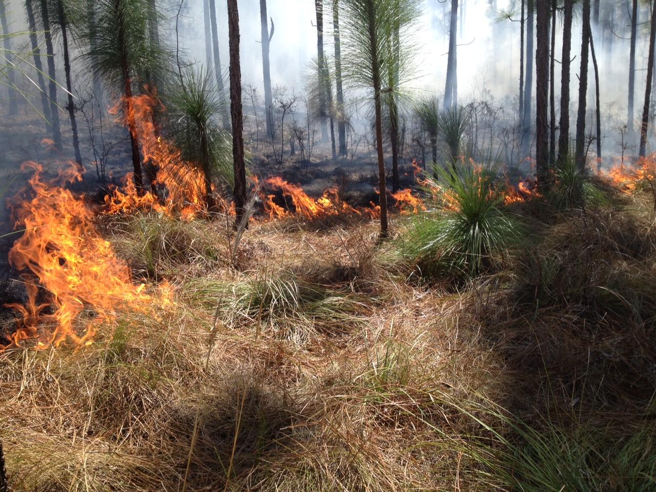 barn burning summary gradesaver