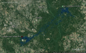 GPS locations of a male black bear from its capture (June 2012) to when the GPS collar dropped off (October 2012).  This black bear covered 20 miles straight line distance from its two furthest points (Tarversville in Twiggs County and Clinchfield Cement Plant in Houston County).