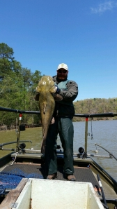 Flathead collected near Clarks Bridge of Lake Lanier.