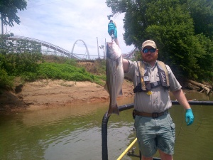 "It can be surprising where stripers will show up on their summer ""vacations."""