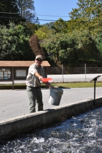 Feeding at the Burton Fish Hatchery.
