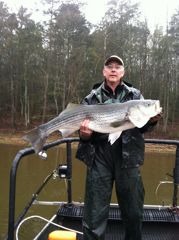 25 pound hartwell striper for West point lake fishing report