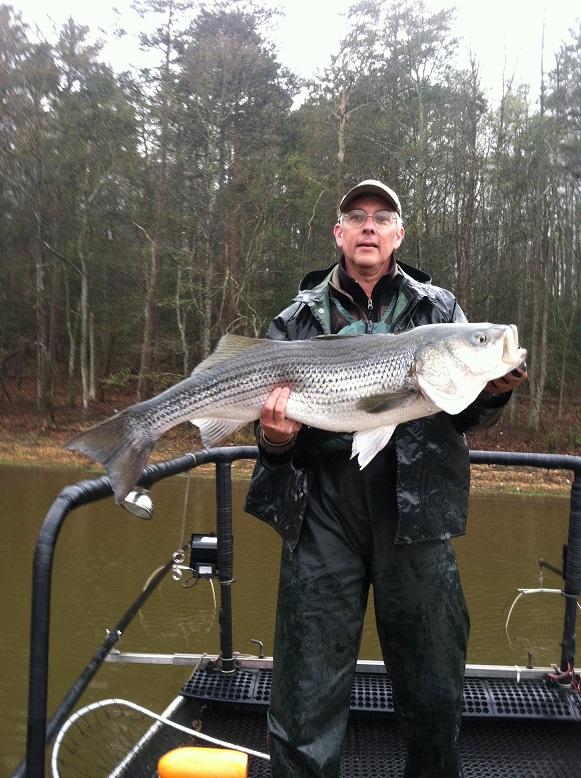 Georgia fishing report april 3 2015 for Lake hartwell striper fishing report