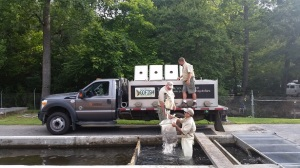 Trout stocking truck loading Aug 2015 resized