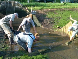 Burton Hatchery staff in action