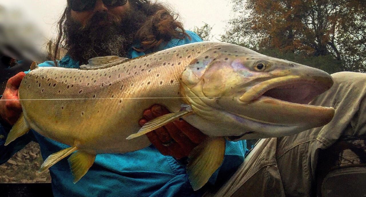Georgia fishing report march 31 2016 georgia wildlife for Center hill lake fishing report
