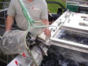 summ trout loading truck Apr 2016 small