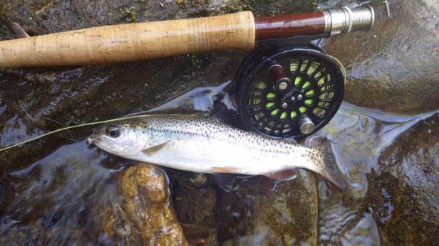 trout Bow_Caddis_Abel sautee 4-16-16