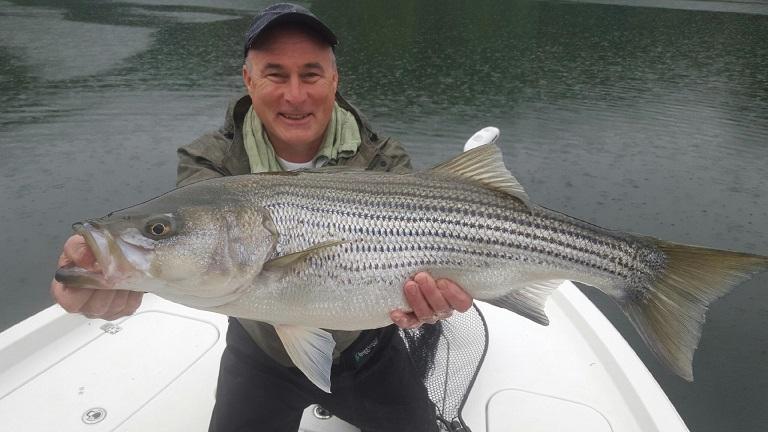 striper Dennis_McKeon_Carters_Lake