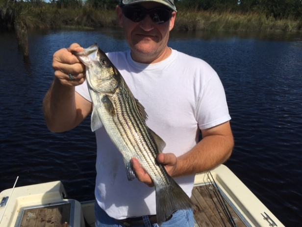 greg-nelms-striped-bass-10-16-jpg