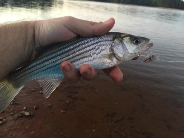 striper-lanier-yoy-landon-oct-2016-jpg