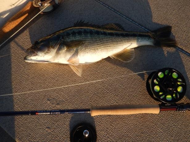 bass-spot-lanier-balus-on-fly-11-24-16