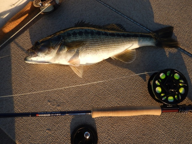 bass-spot-lanier-balus-on-fly-11-24-16