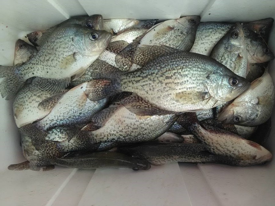 allatoona-crappie-cooler-jan-2017