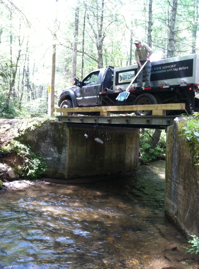 trout stocking wildcat cr 5-1-15 pic6