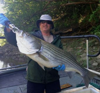 striper oostan sample Bowen 24lb May2017
