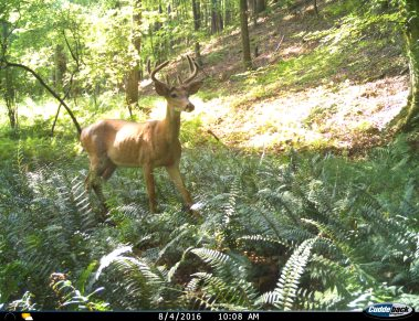 SheffieldWMA TrailCamImages Aug2016.JPG