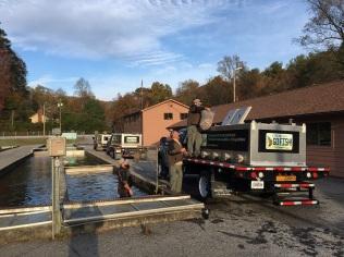 trout stocking Burton DH fleet 11-1-17