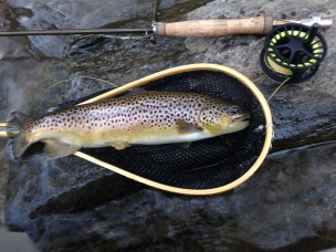 trout bnt 16in Chattooga DH 12-17-17