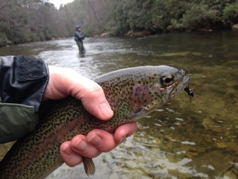 trout rbt rlegs Chattooga dh 12-31-17