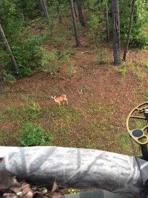 deer sighted from the stand