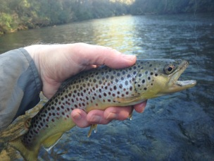 Chattooga BNT dry fly 3-4-18 small